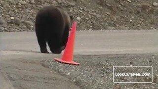 熊熊警察指揮交通